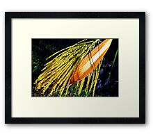Pindo Palm Tree Seed Pods Framed Print