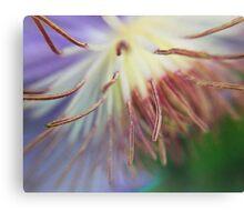 Macro Purple Clematis Bloom Canvas Print