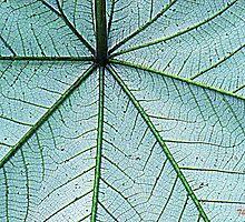 Leaf detail by Thad Zajdowicz