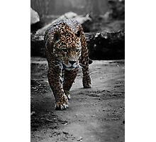 Jaguar on the Hunt Photographic Print