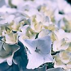 Blue Hydrangea 1 by Elizabeth Thomas