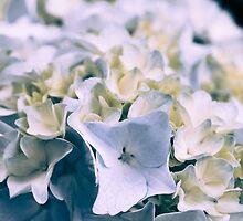 Blue Hydrangea 1 by Elizabeth Thomas