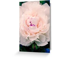 White Pink Peony Flower Bloom Greeting Card
