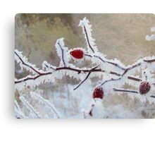 Frost Berry Red Metal Print