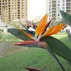 Bird Of Paradise  by NATURES FINEST MOMENTS