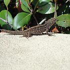 Lizard  by NATURES FINEST MOMENTS