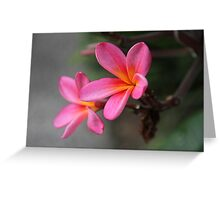Hot Pink Frangipani Greeting Card