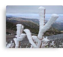 Frost,on top of Mt Rose,Reno Nevada USA Canvas Print