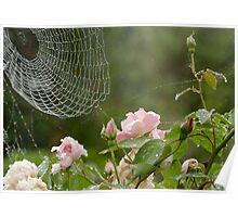 cobwebs, roses and raindrops Poster