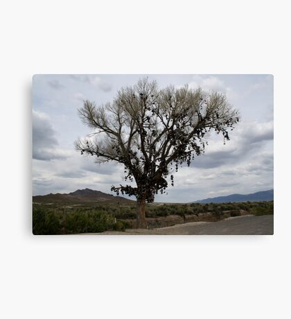 The Shoe Tree,outside Fallon Nevada,USA Canvas Print