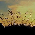 An Evening Sky With Grasses by Fara