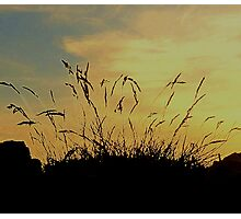 An Evening Sky With Grasses Photographic Print