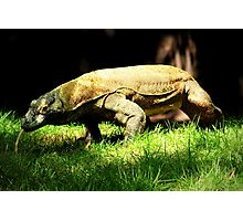 Komodo Dragon Photographic Print