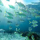 Underwater World by tracyleephoto