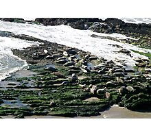 Seals Photographic Print