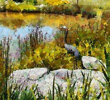 Garden pond by Fran Woods