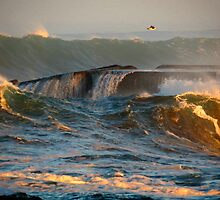gull and wild waves by Alex Call