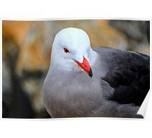 Red Beak Seagull Portrait Poster