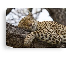 It's a tough life! Canvas Print