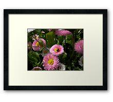 ladybug on daisy Framed Print