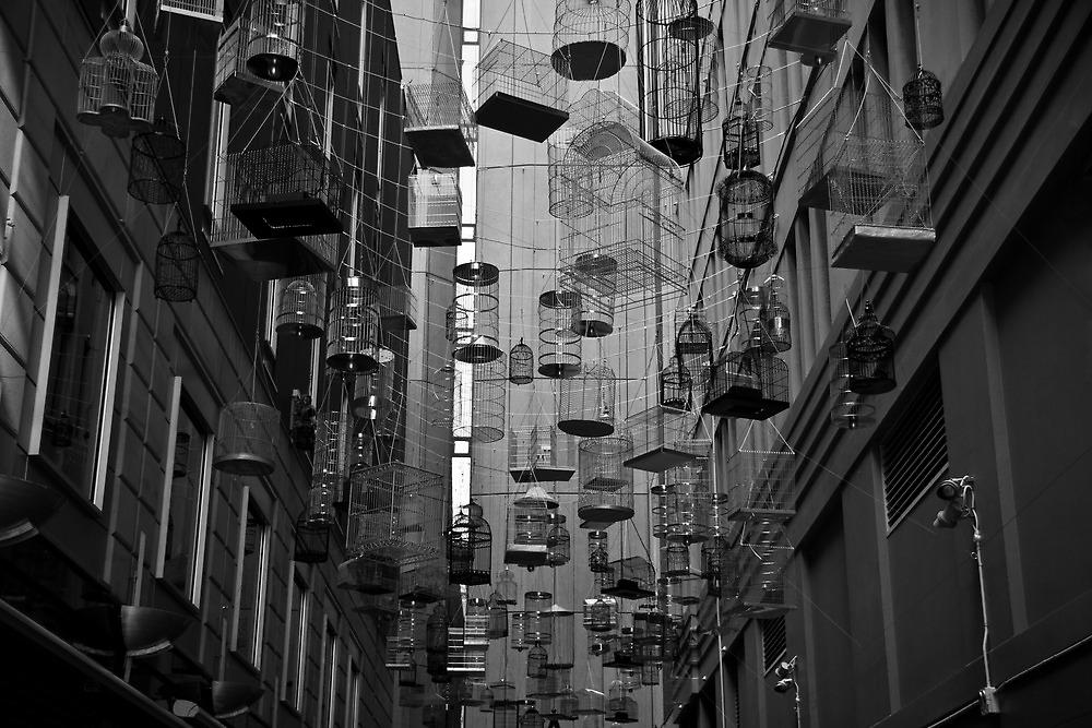 Urban nest by davidprentice