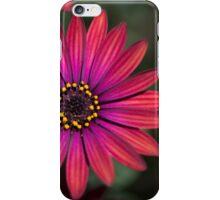 Osteaspermum 'Elite Ruby' Flowers iPhone Case/Skin