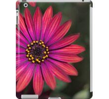 Osteaspermum 'Elite Ruby' Flowers iPad Case/Skin