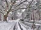 Snow On The Towpath - HDR by Colin J Williams Photography