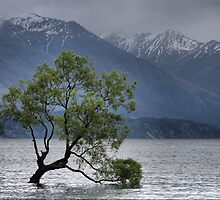 A Grey Day on the Wanaka Tree by Larry Lingard-Davis