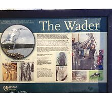 The Wader info Photographic Print