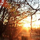 Light of Day.  by jeune-jaune