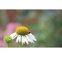 Busy Bee on Flower Photographic Print