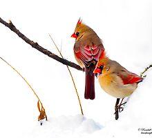 Two Females Posing as Cardinals by Randy & Kay Branham