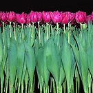Platoon of tulips by Arie Koene