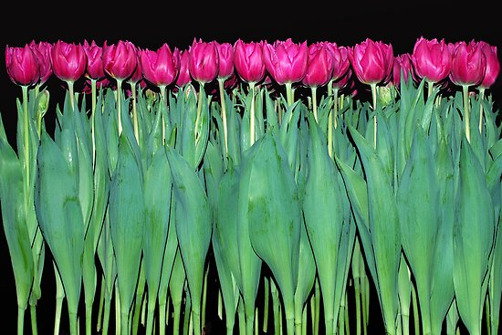 Platoon of tulips by Arie Koene