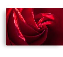 Red, red rose Canvas Print