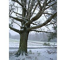 The Oak in Winter Photographic Print