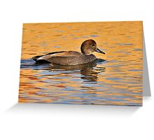 Duck - Gadwall Greeting Card