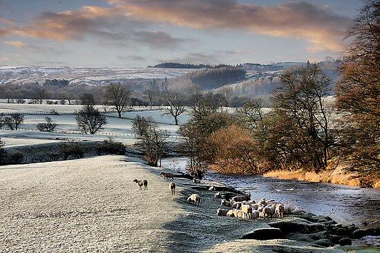 Feeling the winter chill. by Irene  Burdell