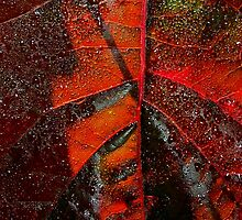 Red Leaf Abstract ll by BavosiPhotoArt