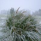 The Pampas Grass in Snow by Valerie Howell