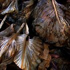 Decaying Hosta Leaves by BavosiPhotoArt