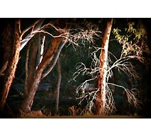 Barren by Lorraine McCarthy Photographic Print