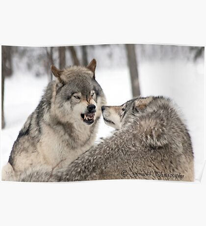..about wolves and arguments.. Poster
