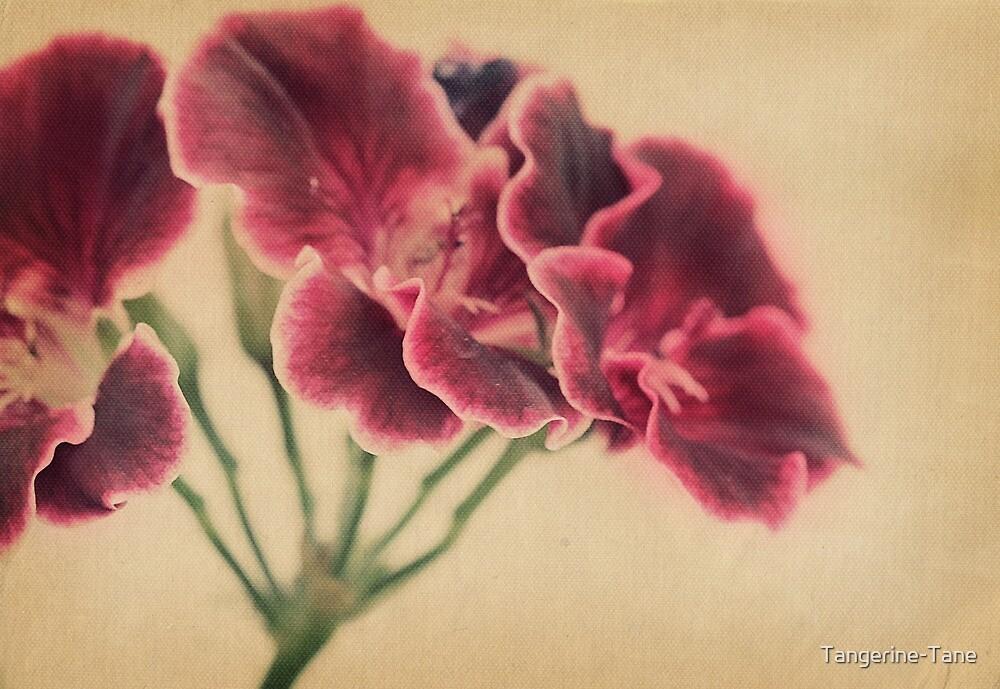 Geranium Frills by Tangerine-Tane