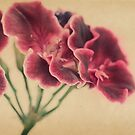 Geranium Frills by Tangerine-Tane