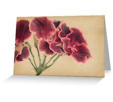 Geranium Frills Greeting Card