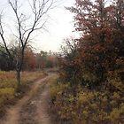 A Path Less Traveled by Paul Sturdivant