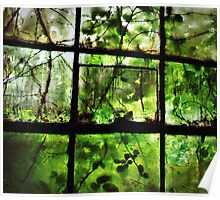 Green Leaves On Window l Poster