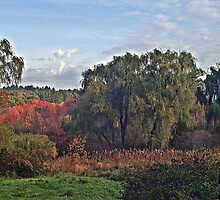 Massachusetts Willows Landscape by BavosiPhotoArt